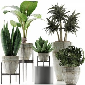 Plants Collection 37