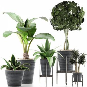 Plants Collection 40