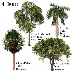 Set Of Trees (china Palm, Chinaberry, Round Shaped