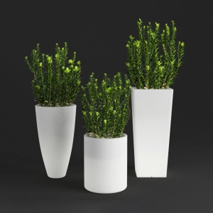 Young_boxwood. Led Flowerpot
