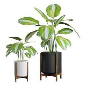Plant For Decor