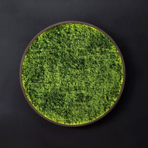Mosswall Disk