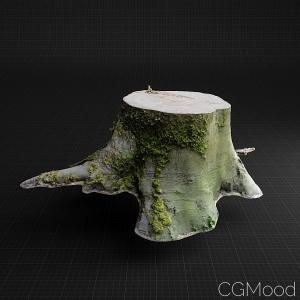 Tree Stump_021