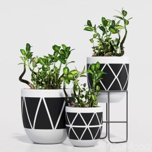 Designtwins pot