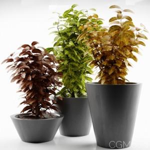 plant 14