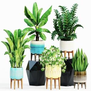 Plant Set West Elm