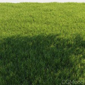Wild Grass V.1