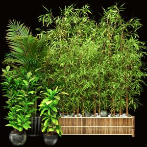 Outdoor Plant Set