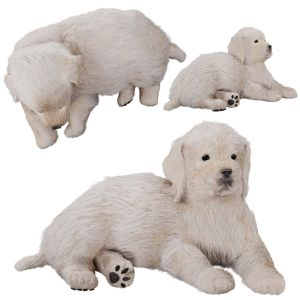 Labrador Puppy - Golden Retriever