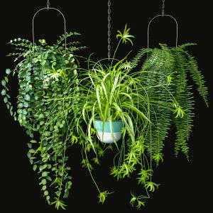 Hanging Plants Set