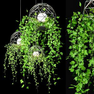 Ivy Hanging Plants Set