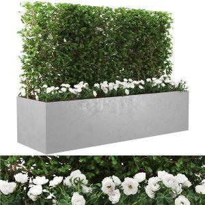 Urban Plant