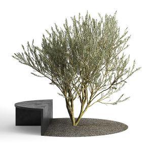 Rta European olive