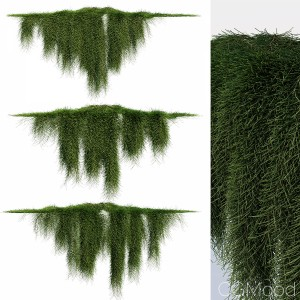 Creeper - Casuarina Glauca - 3 Modular Pieces