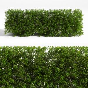 plant 40