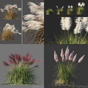 Ornamental grasses vol.1