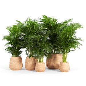 Tula Planter Collection