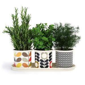Kitchen Herbs In Pots Orla Kiely
