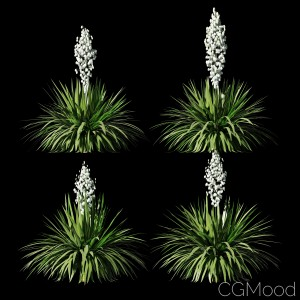 Blooming Yucca. 4 Models