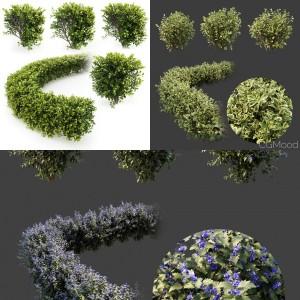 Hedge shrubs vol 1