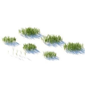Wild Grass V.2