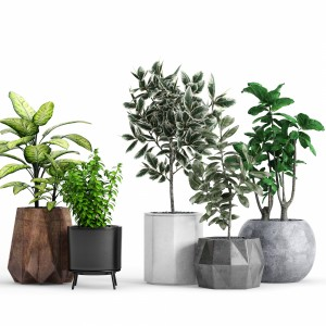 Plants And Planters 12