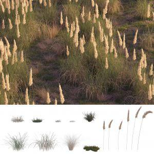 Field Grass №2