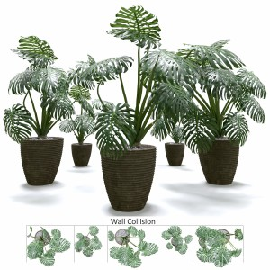 Monstera Deliciosa Wall Collision Plant Set