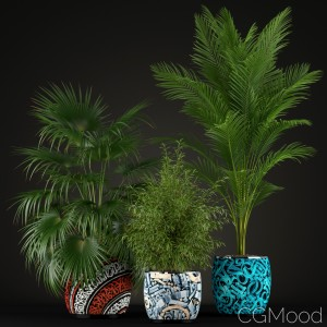 Plants Collection 199