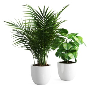 Decor Set Plants 1