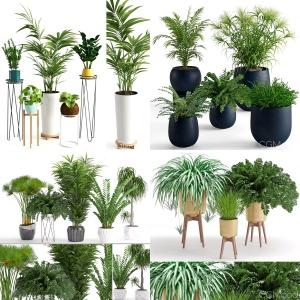 Plants Collection Vol 4