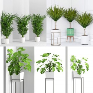 Plants collection vol 5 (wall Collisions)