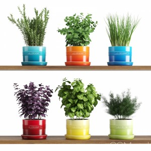 Kitchen Herbs In Le Creuset Planters