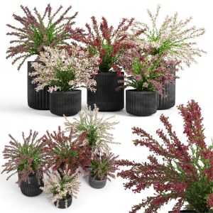 Cozzo Planter Weigela